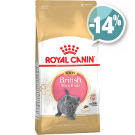 Royal Canin British Shorthair Kitten для котят